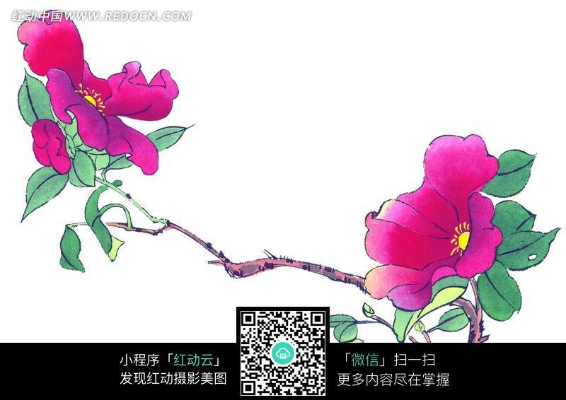 手绘红茶花