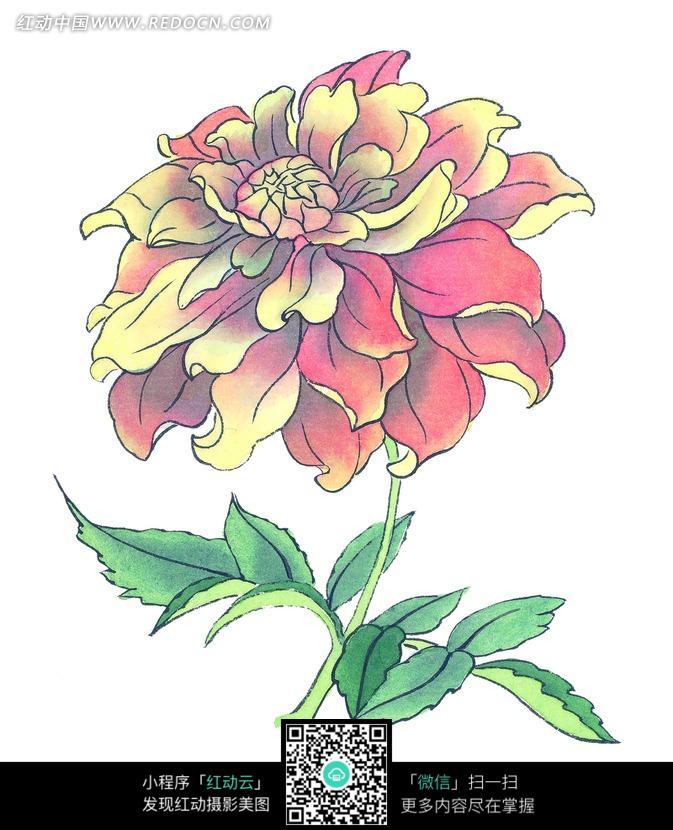手绘漂亮的大丽菊