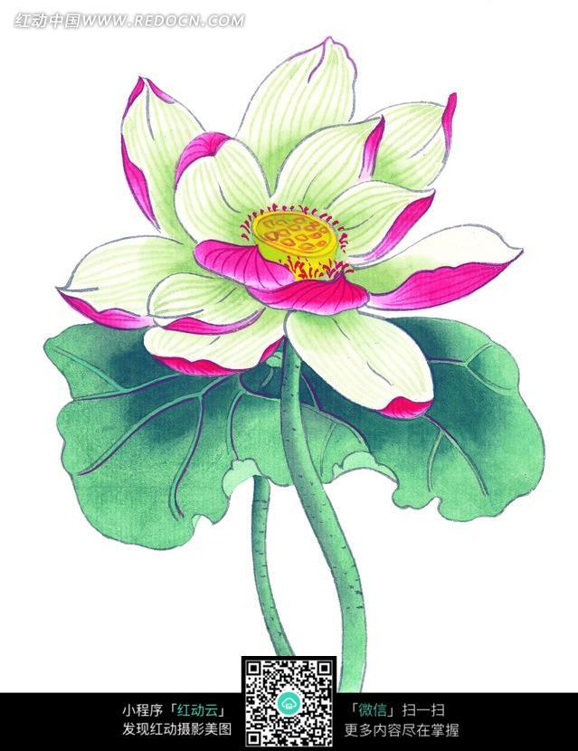 手绘莲花,荷叶图片免费下载 红动网