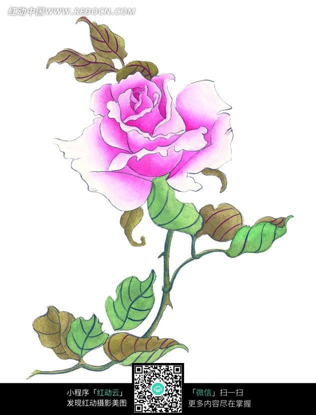 手绘粉红月季花图片_书画文字图片