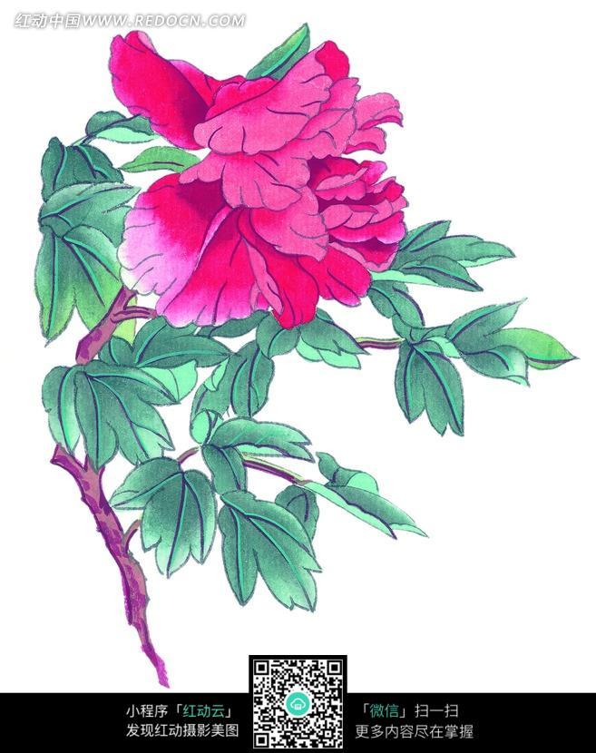 手绘娇媚的牡丹花