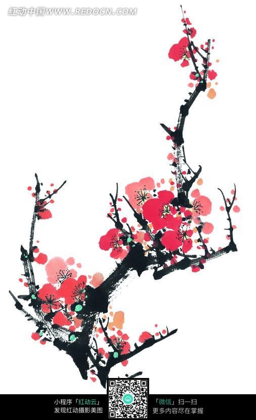 红色盛开的梅花水墨画图片