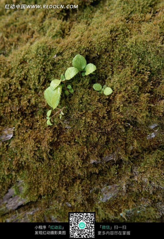 发芽生长的绿色植物花卉 发芽的小豆苗 开始发芽的绿豆苗 绿色草上一
