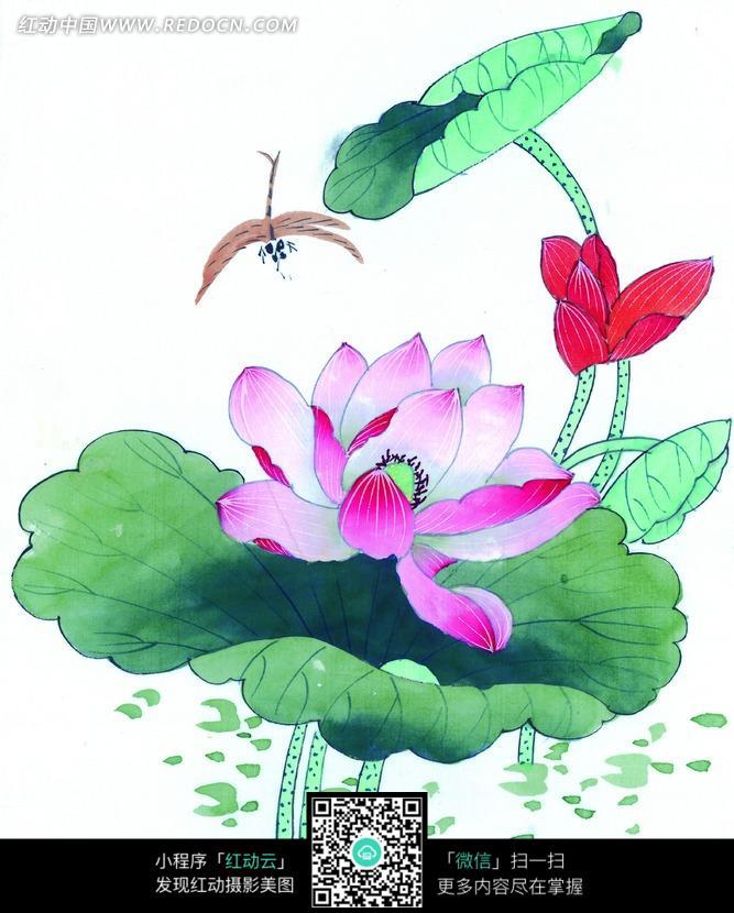 荷花和蜻蜓工笔画