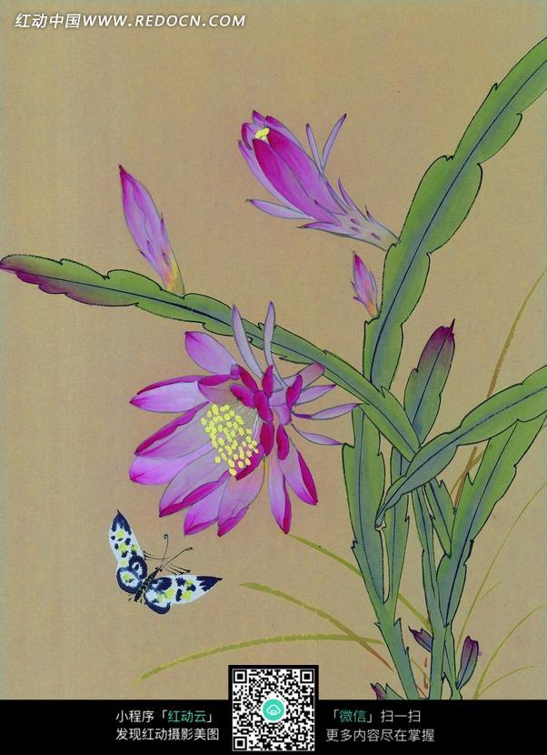 工笔画—美丽的蝴蝶和盛开的花朵图片
