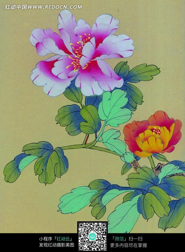 工笔画—盛开的粉色和橘色牡丹花?