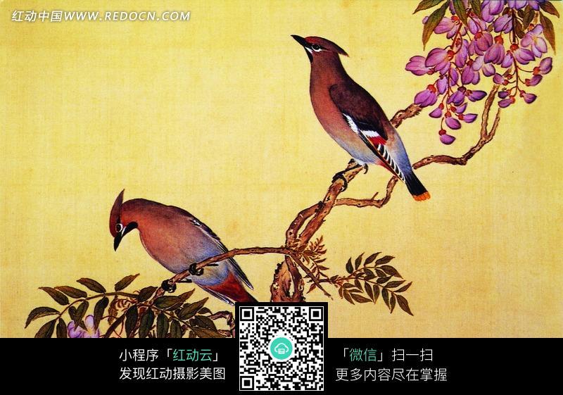 工笔画—站在树枝上的喜鹊图片