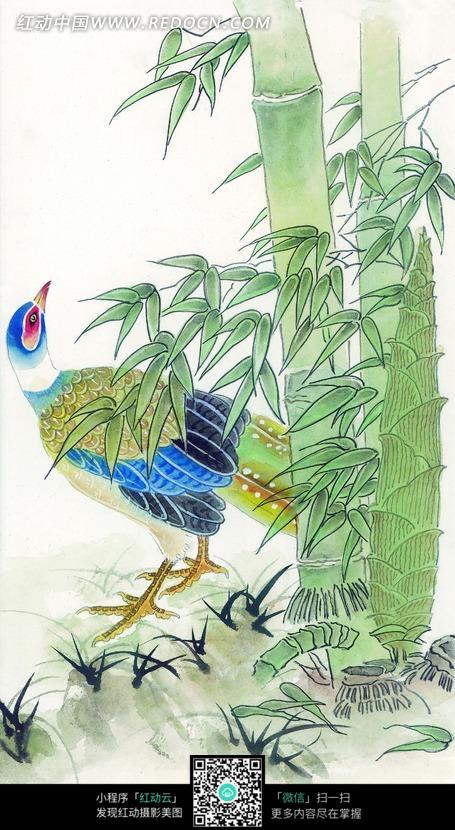 竹边的锦鸡工笔画