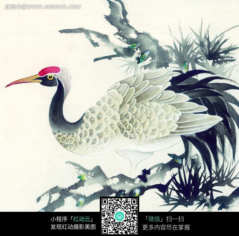 树枝上的丹顶鹤工笔画图片免费下载 红动网