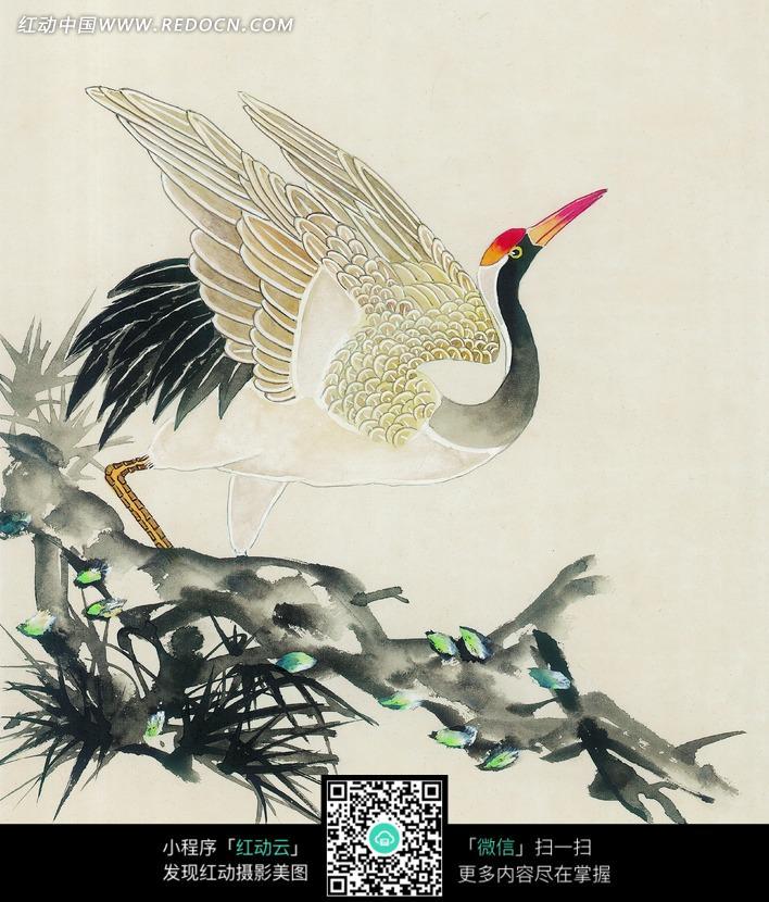 仰头的丹顶鹤工笔画图片