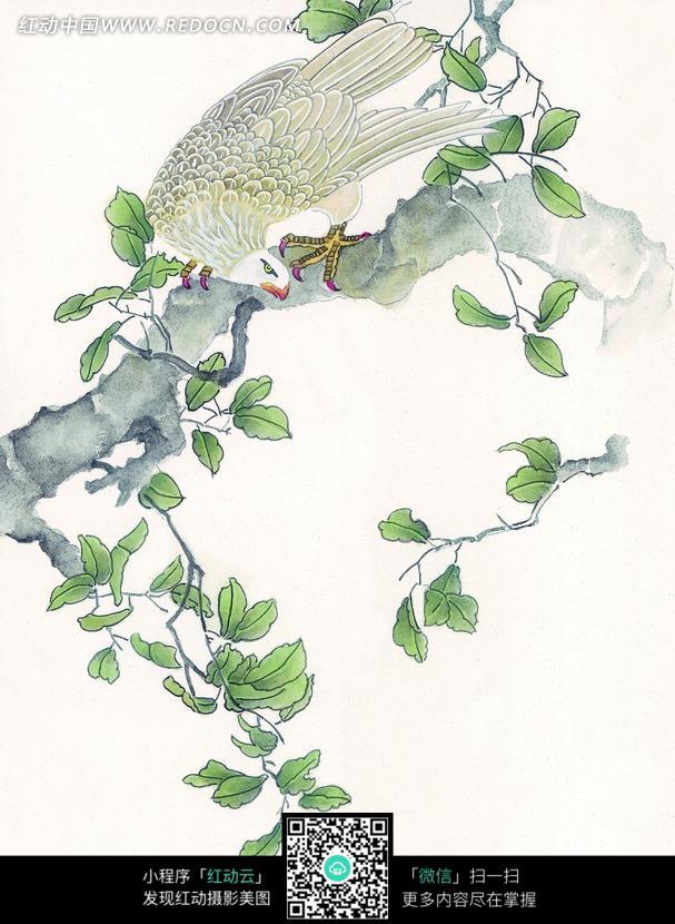 白色 工笔画 鸟儿/绿叶树枝停立白色鸟儿工笔画