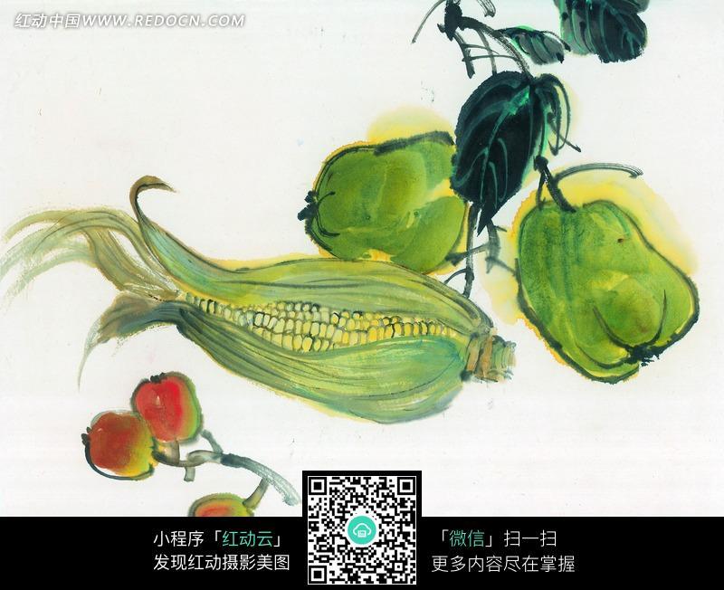 佛手瓜与玉米枇杷写意画图片图片