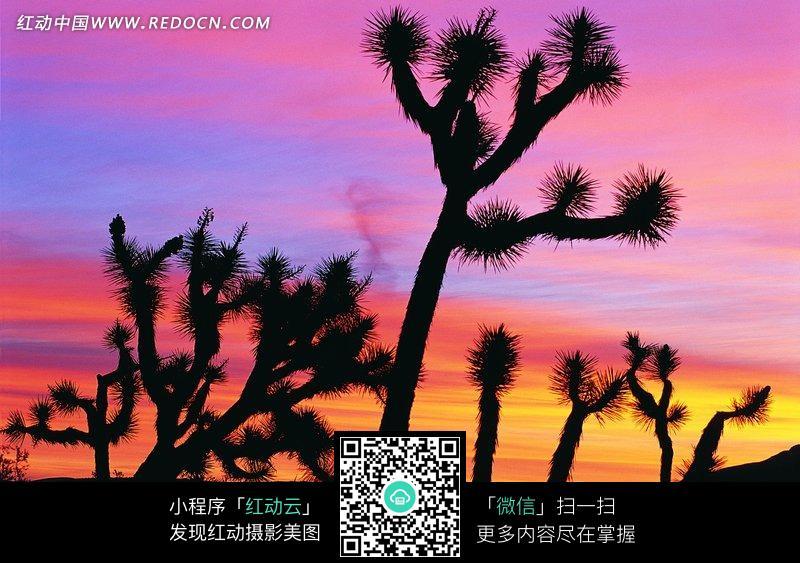 夕阳下的非洲草原动物剪影图片_自然风景图片_红动