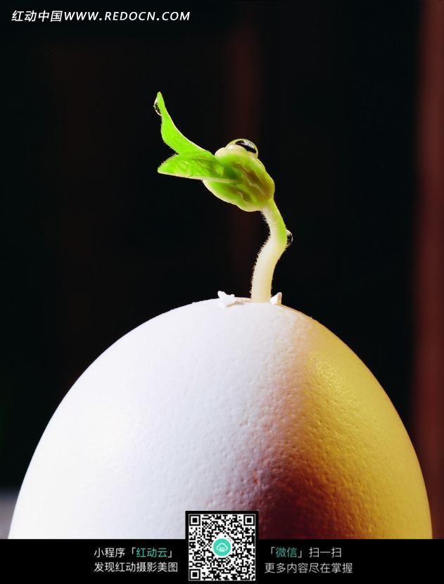 长在鸡蛋上的幼苗图片_花草树木图片