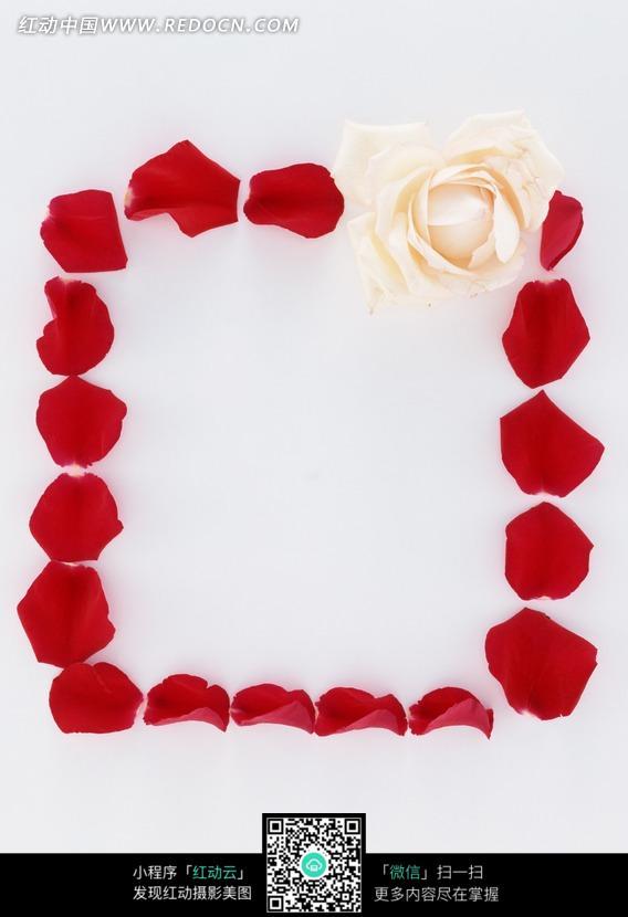 玫瑰花瓣组成的正方形 花纹花边图片
