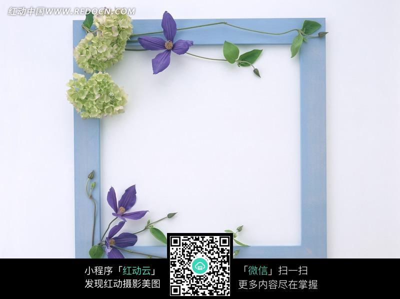 木框 相框 蓝色木框 花朵 绿叶 摄影图片 图片素材 静物摄影 花纹
