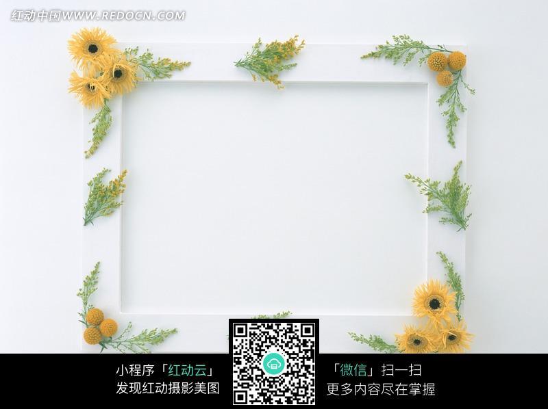 白底相框上放着装饰鲜花图片图片