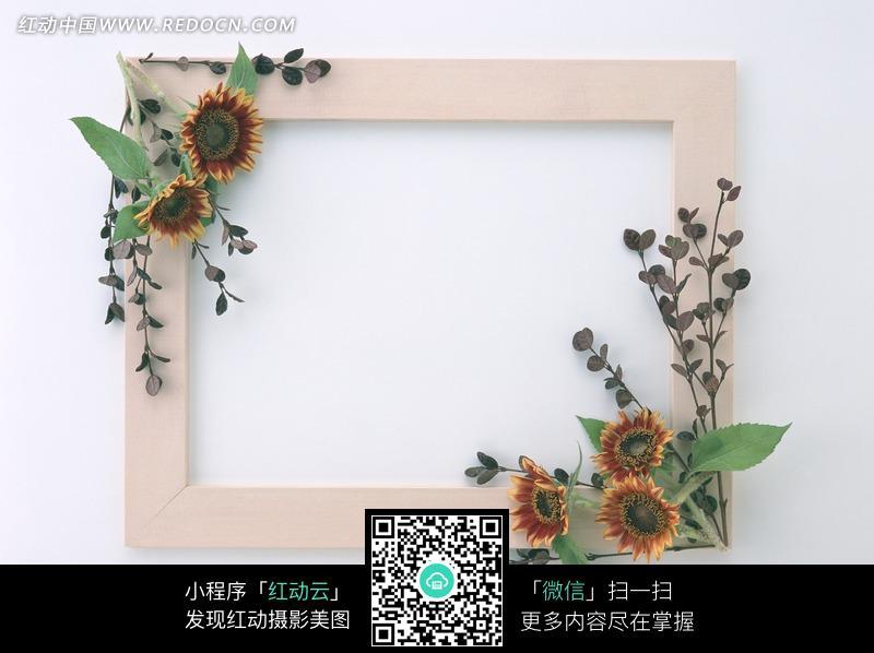 画框对角的向日葵花朵图片图片