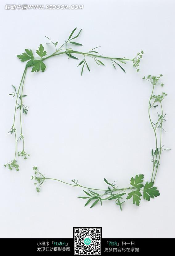 绿草藤蔓组成的相框_花纹花边图片