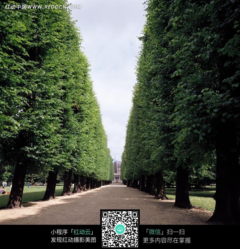 风景树品种图片小树苗