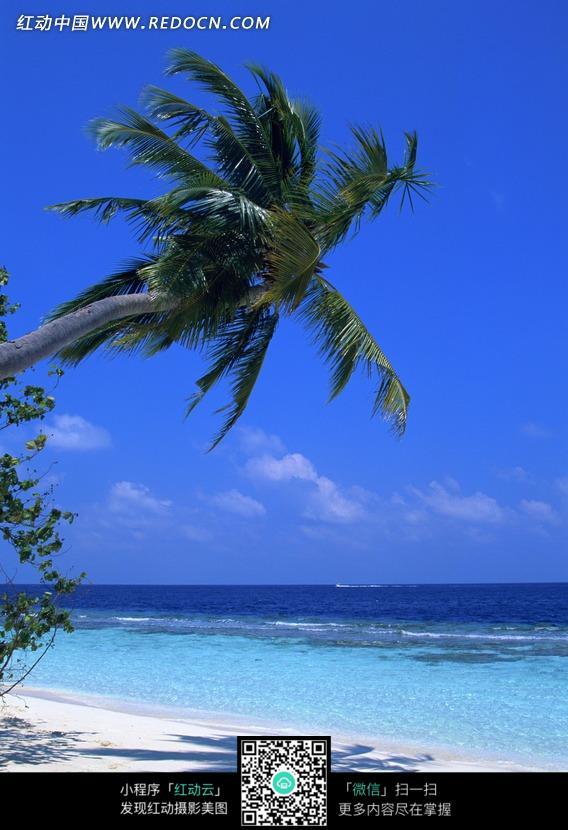 蓝天白云下海边沙滩上的椰树和树影图片