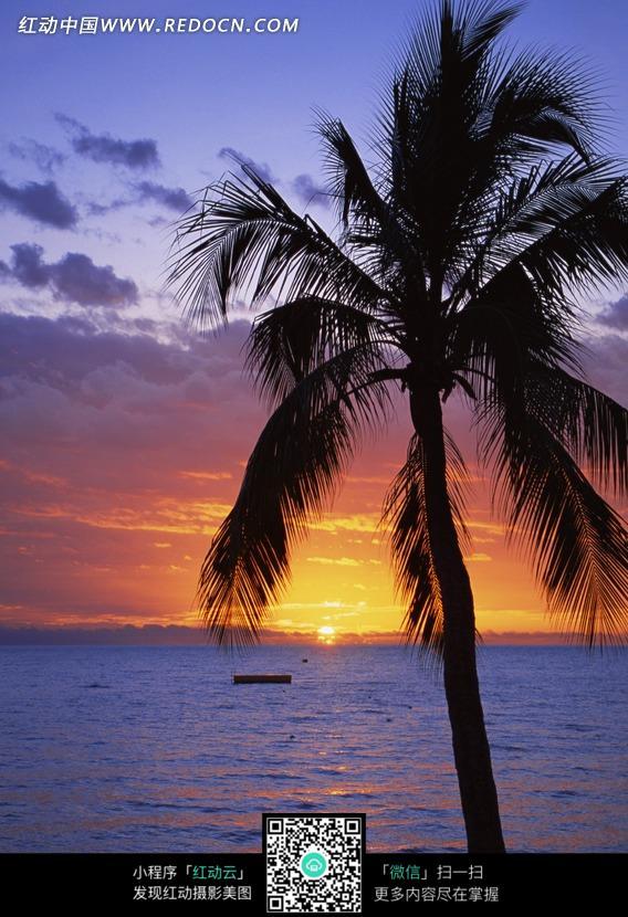 夕阳余晖下大海边耸立的椰树图片