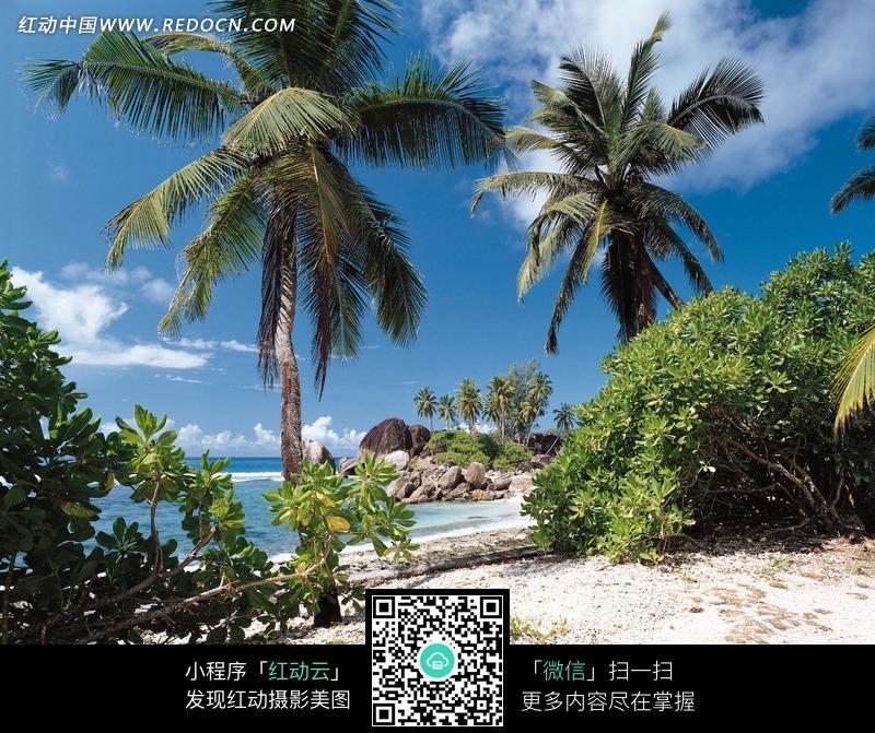 海边沙滩和棕榈树图片_自然风景图片