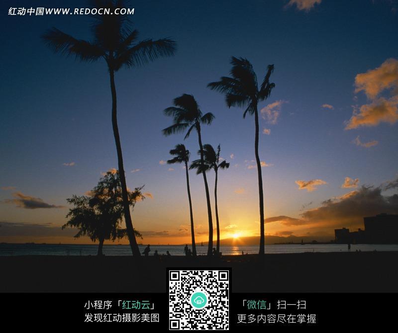 海边夕阳下的椰树剪影