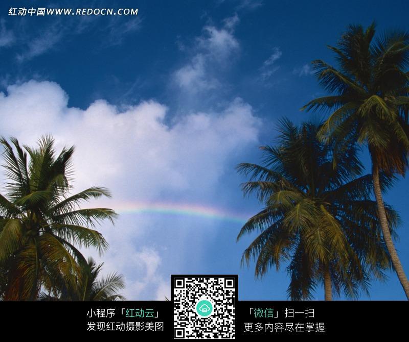天空中的彩虹和椰子树图片