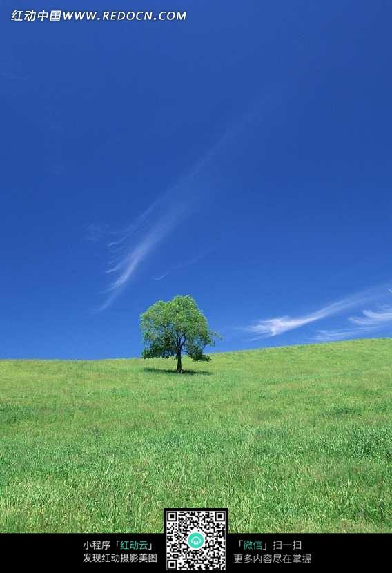 蓝天白云下野草地上的一棵树图片
