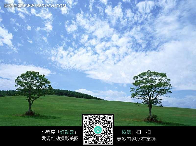 蓝天白云下绿色草地上的两棵树图片