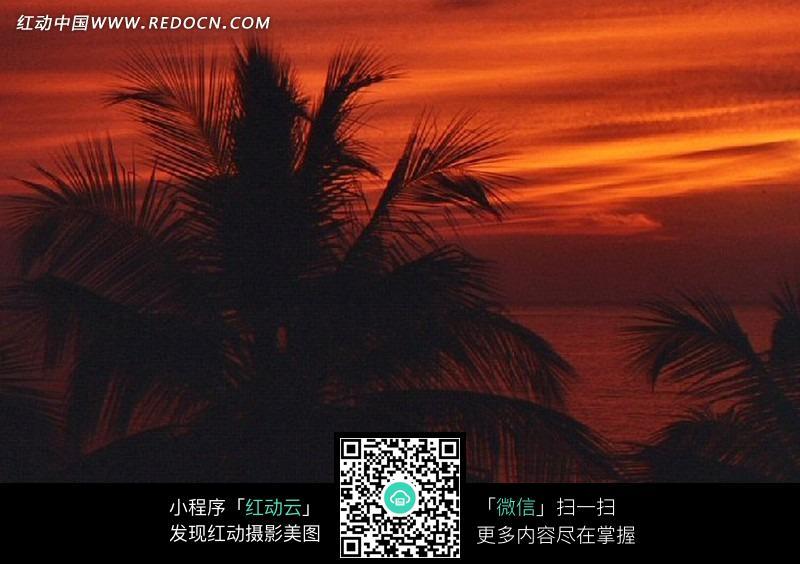 免费素材 图片素材 自然风光 自然风景 火红色晚霞和棕榈树  请您分享