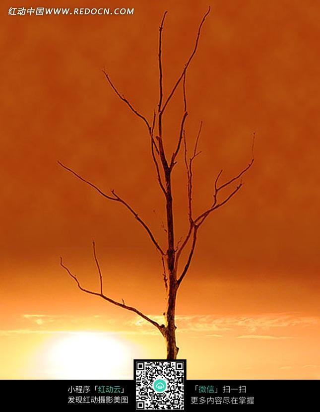 风景图片高清枯枝