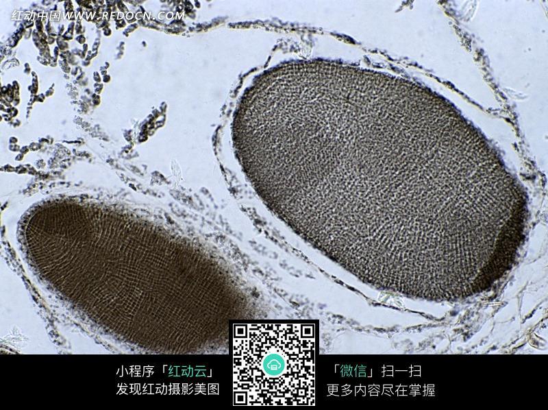 黑色手指纹植物细胞图案
