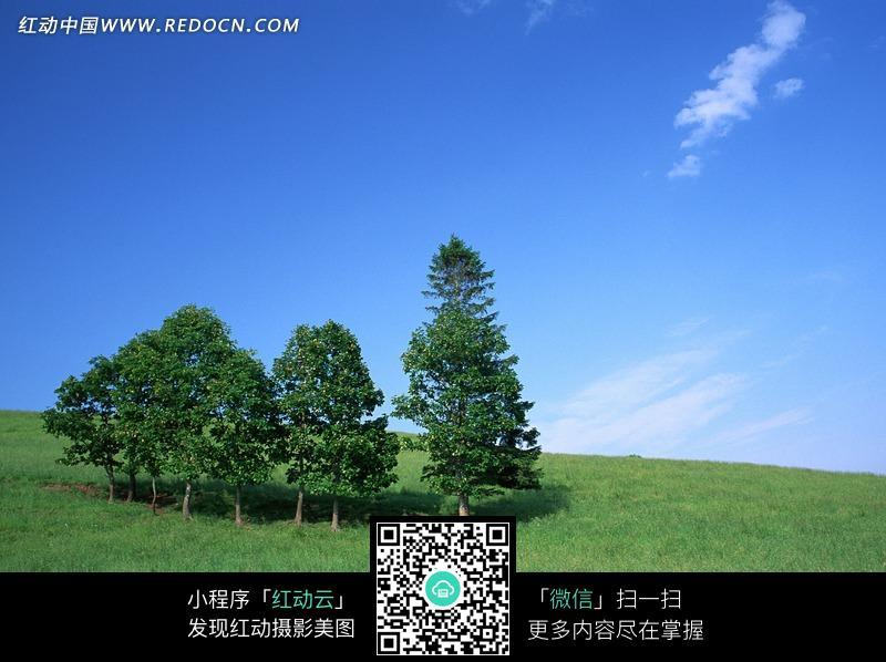 蓝天白云下草地上的一排树图片_自然风景图片