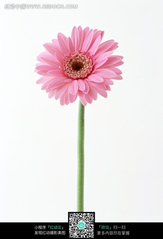 粉色国外风景图片