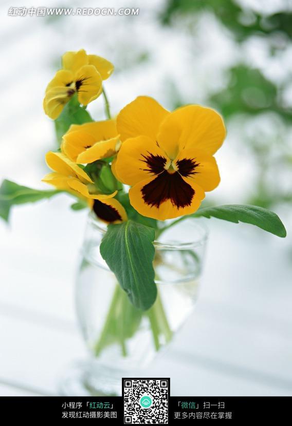 免费素材 图片素材 生物世界 花草树木 玻璃杯里的蝴蝶花
