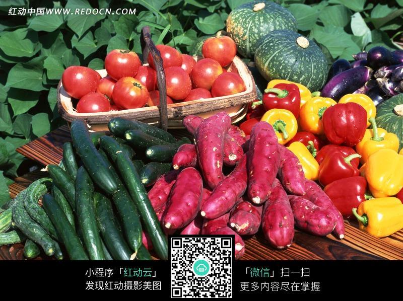 红薯的品种大全图解