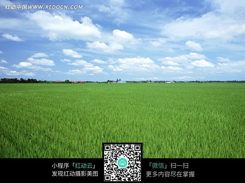 蓝天白云下绿油油的麦田和远处的村落