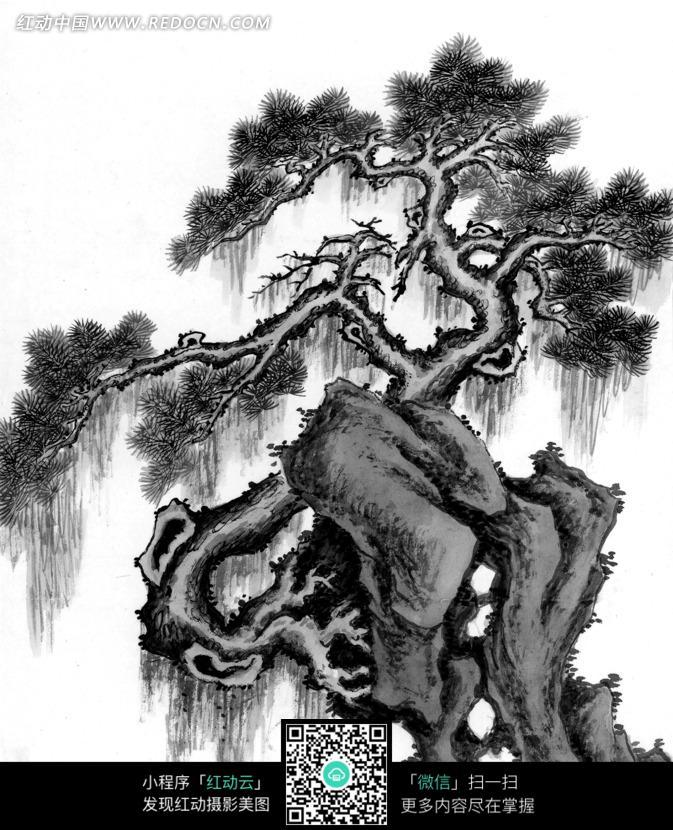 一棵小松树水墨画图片