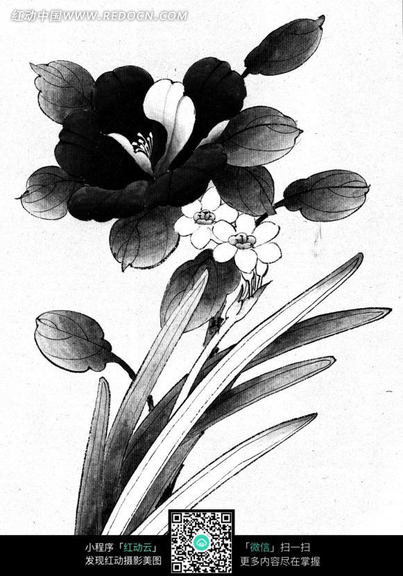 植物花朵叶子工笔画