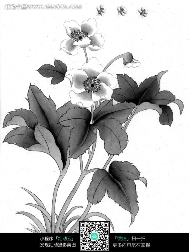 工笔画—盛开的花朵和蜜蜂图片