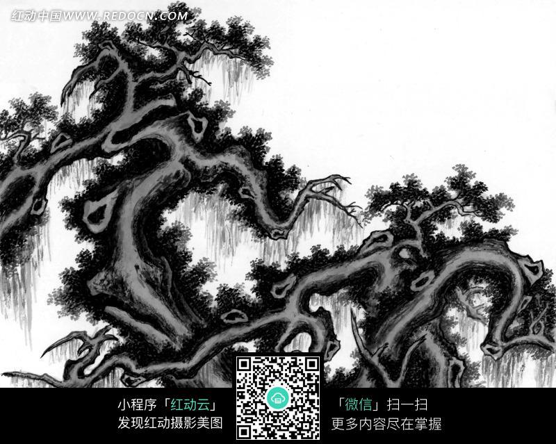工笔画—树干扭曲的古树