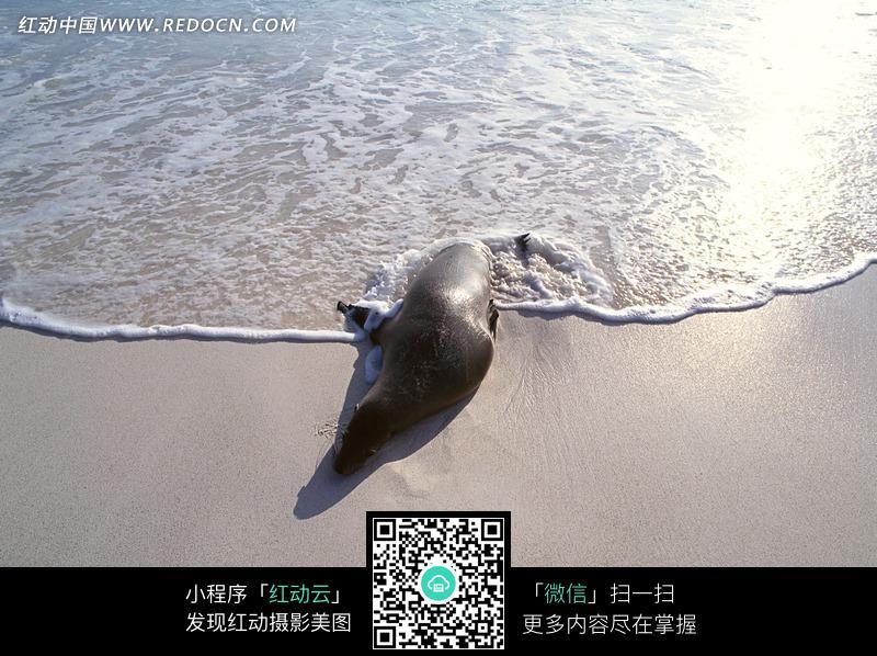 海边休息的海狮图片_水中动物图片