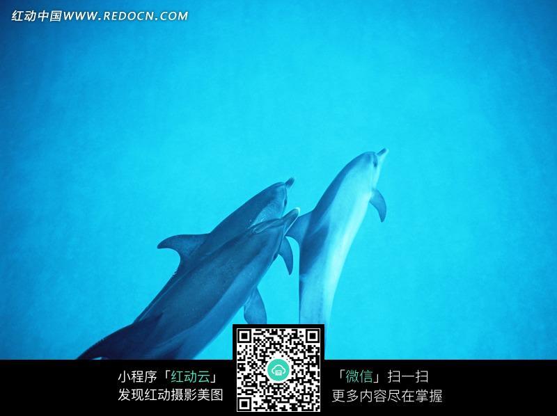 几条在海洋里嬉戏的海豚素材图片_水中动物图片