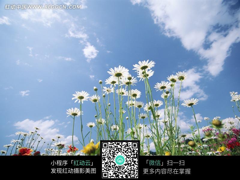 蓝天下盛开的花朵