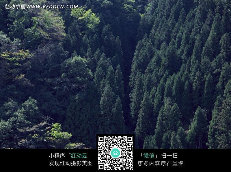 森林中茂密的树木图片