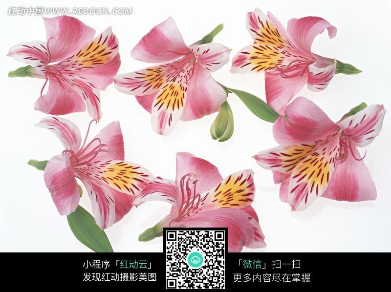 六朵绿叶红花_花草树木图片