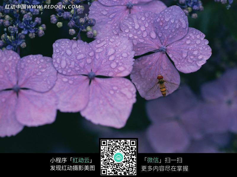 沾满露珠的紫色花朵