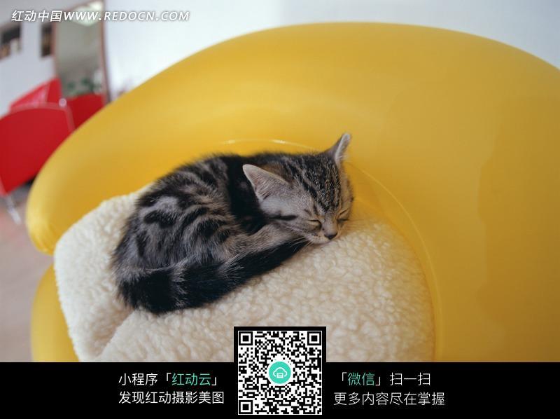 猫咪 蜷缩 睡觉 白色垫子 可爱 宠物 动物 动物图片 动物照片 摄影